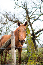 a horse near a barbed wire fence
