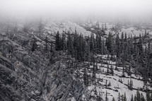 trees on a snowy mountainside