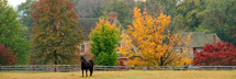 horse in a field in front of fall trees