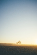 isolated tree in a field at sunrise