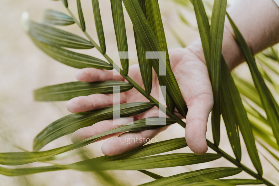 hand touching a palm frond
