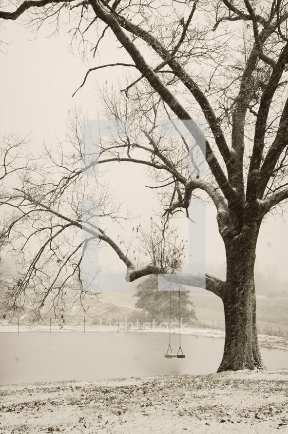 Swing on tree in the winter