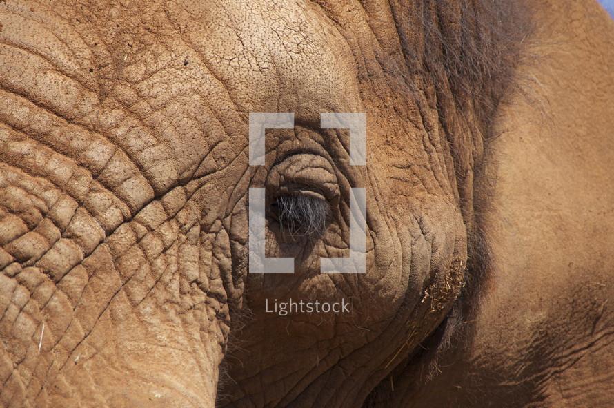 Close up of elephant's eye. Africa wild life.