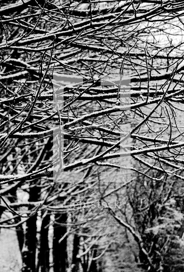 snow on the branches of winter trees