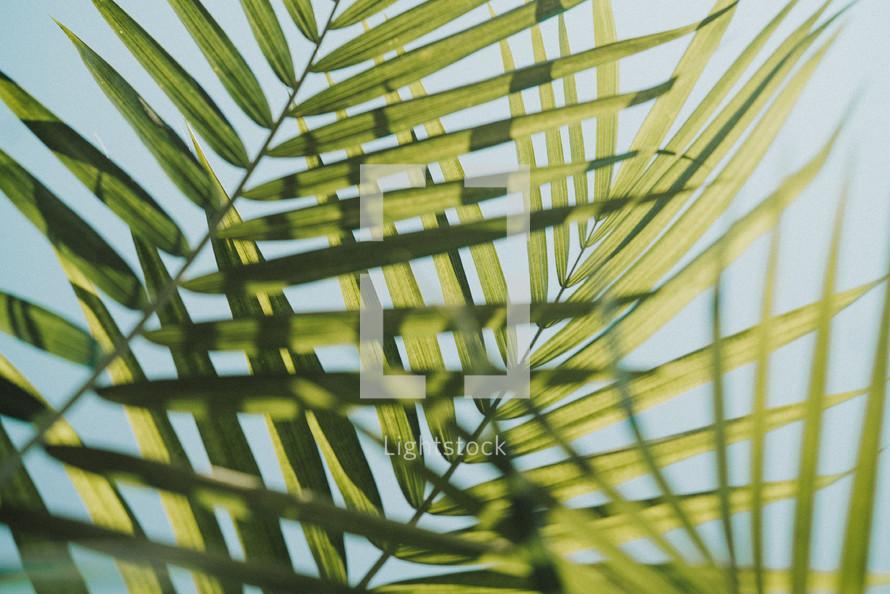 sunlight on palm leaves