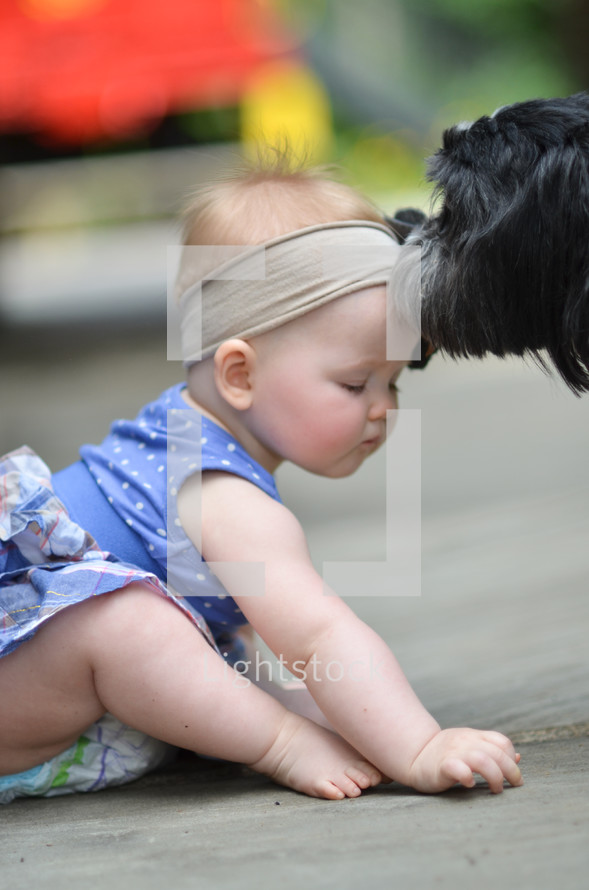 dog licking a toddler girl on the forehead