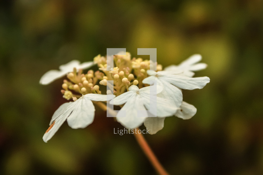 Close up of a wilting white flower
