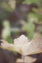 fall leaf against a blurry background