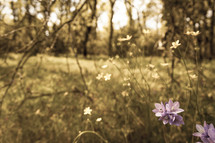 Purple flowers in a forest
