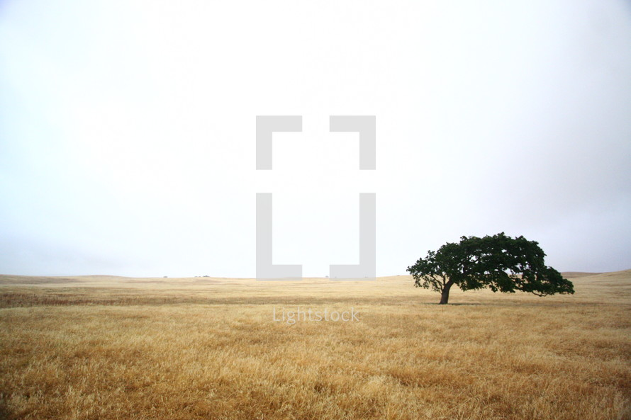 tree in isolation in a field