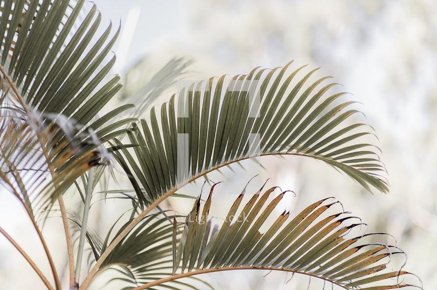 palm leaves on a palm tree