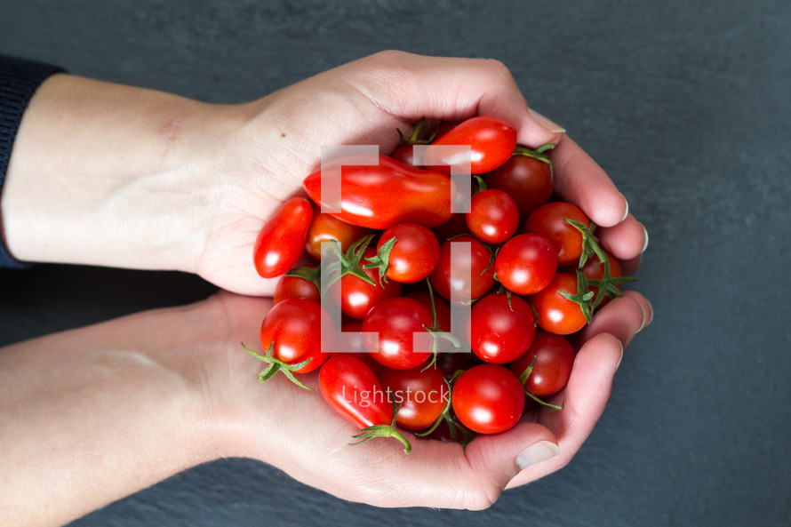 cupped hands holding cherry tomatoes
