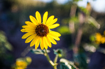 A bright yellow flower.