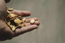 hand holding pumpkin seeds