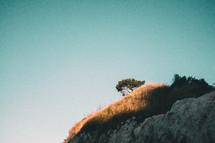 sunlight shining on a hillside