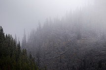 trees on a mountainside in fog