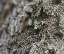 ants on rocks