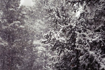 snow on trees in a forest