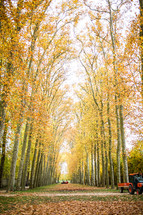 fall trees in France