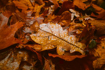 wet fall leaf on the ground