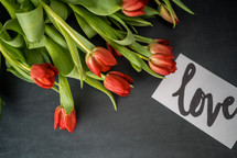 red tulips and the word love