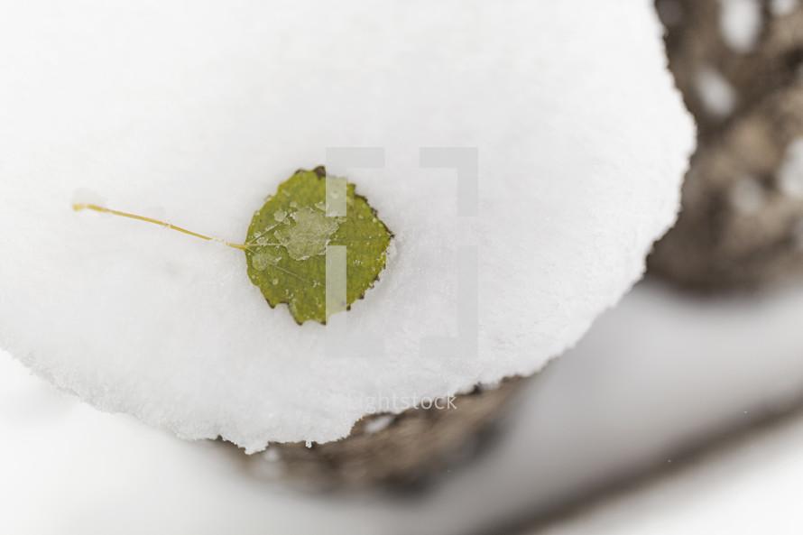 green leaf on snow-covered log