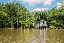 palm trees along shore and cabin on stilts