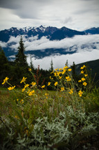 yellow wildflowers and mountain peaks