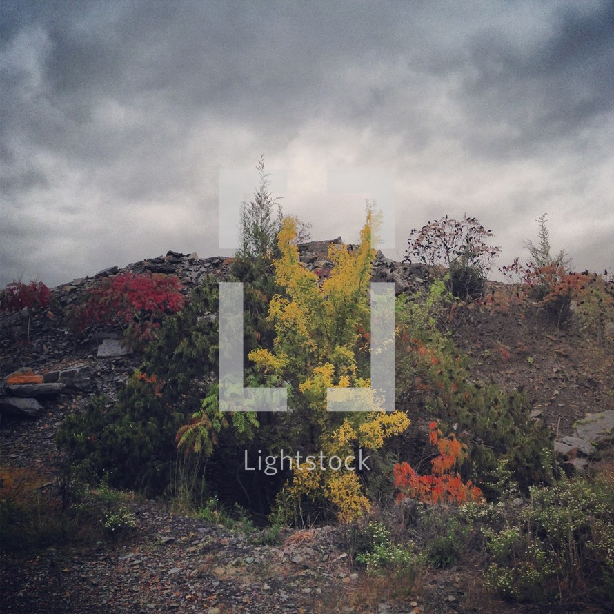 foliage growing on a hillside