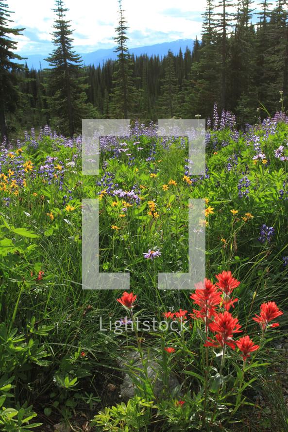 Wildflowers in forest field