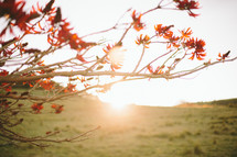 Sunrise over a grassy hill with a blooming tree.