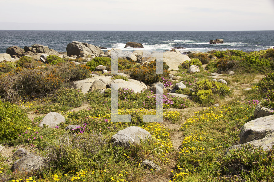 wild flowers and rocks by the ocean