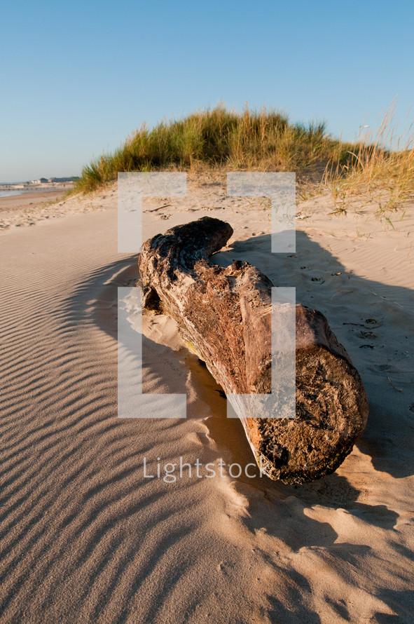 driftwood on beach sand