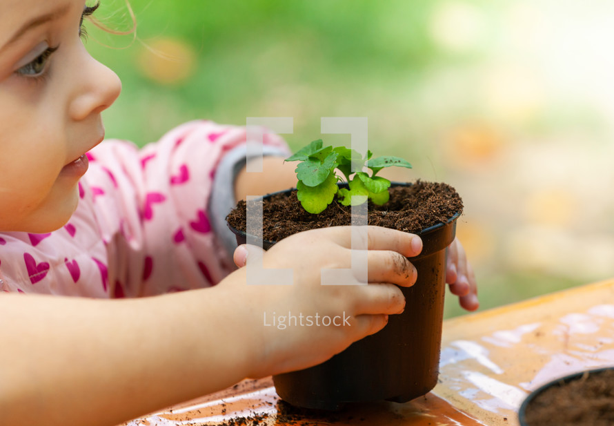 a child planting a beet sprout