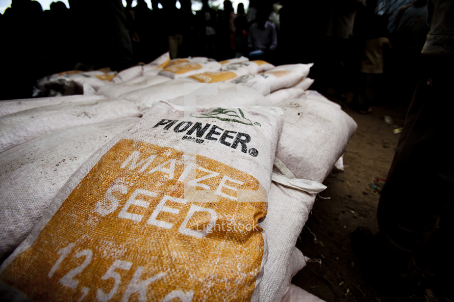 A bag of Maize (Corn) Seed