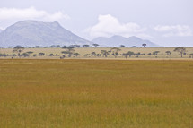 African mountain and savanna