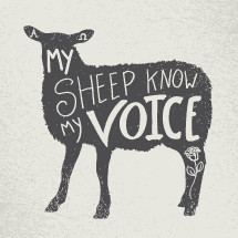 my sheep know my voice