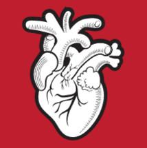 Stylized anatomical heart illustration