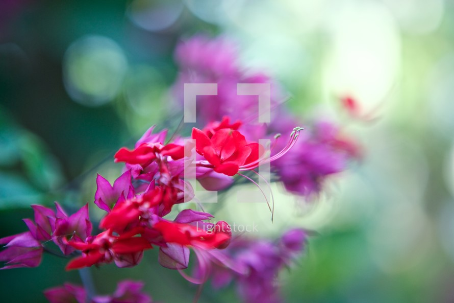 Stem of pink and red flowers with greenery in the background.