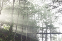 sunlight in a forest and a swinging bridge
