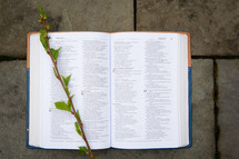 twig on the pages of a Bible