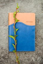 twig on the cover of a Bible