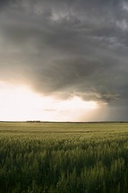 storm clouds over a green field of wheat