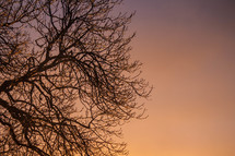 winter tree branches at sunset