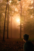 a little boy looking into a forest at sunset