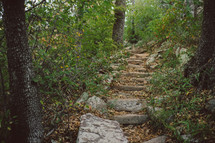 stone steps in a forest