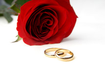 red rose and wedding bands