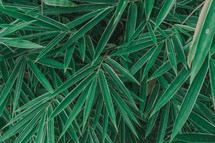 palm fronds background
