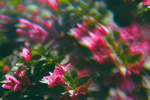 blurry out of focus flowers