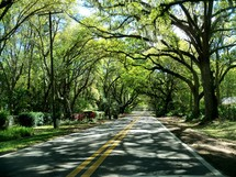 Two-lane country road canopied by trees.